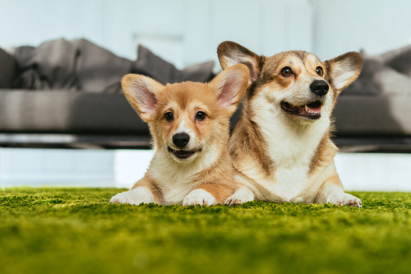 söta hundar - välj rätt hundförsäkring